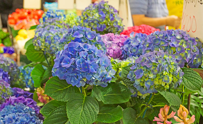 Hydrangeas + Hyacinth at Farmer's Market | dcgirlinpearls.com
