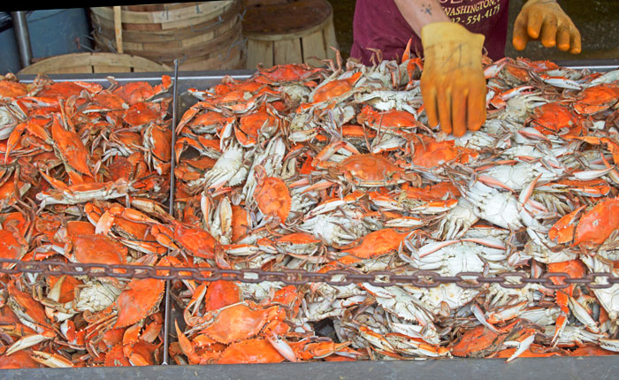 Maine Avenue Seafood Market in Washington, DC | dcgirlinpearls.com
