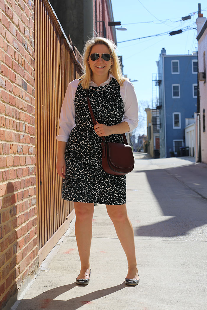 Office Style Leopard Dress | @dcgirlinpearls